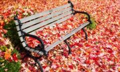 autumn-1037307