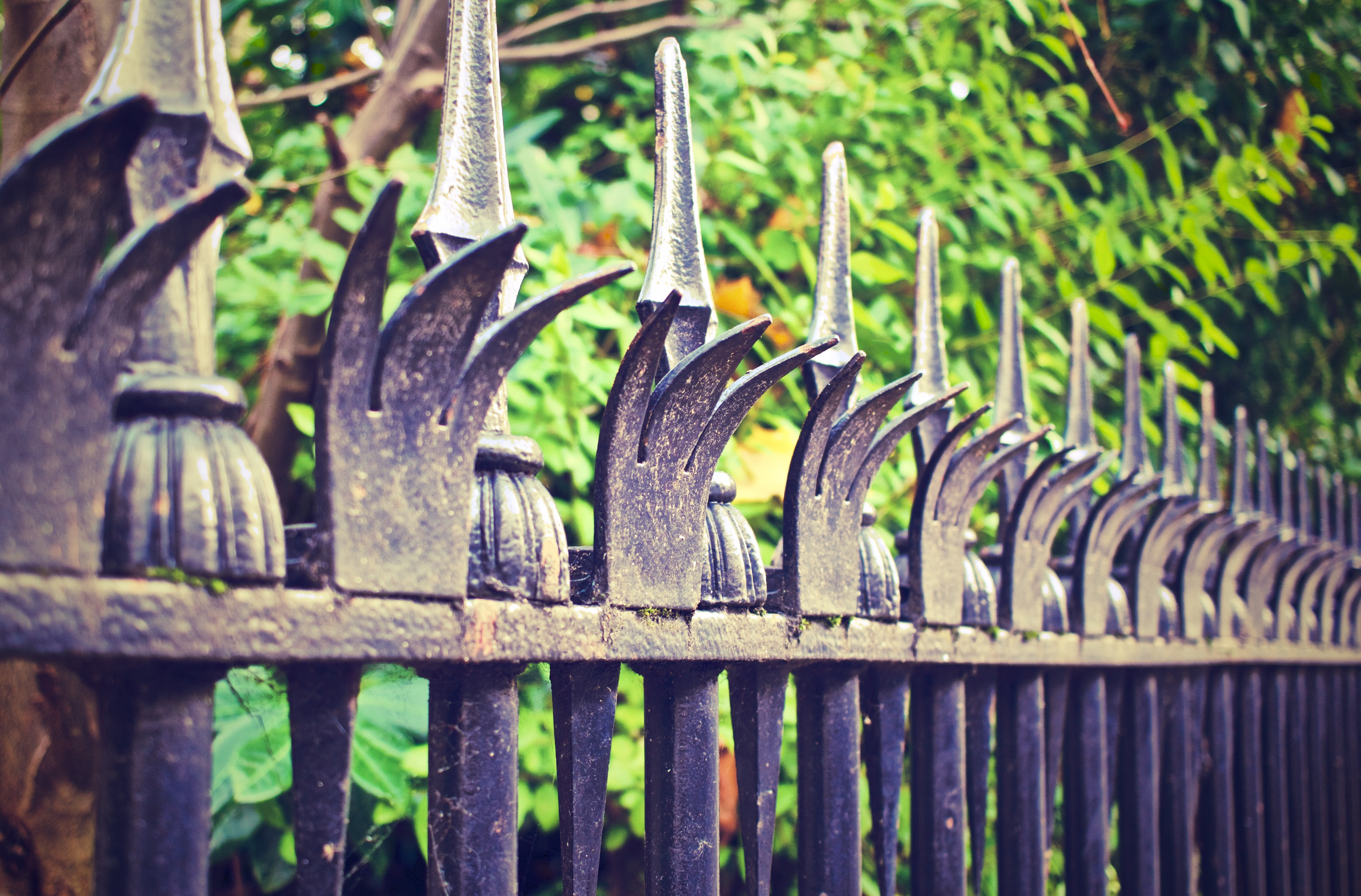 fence-569281